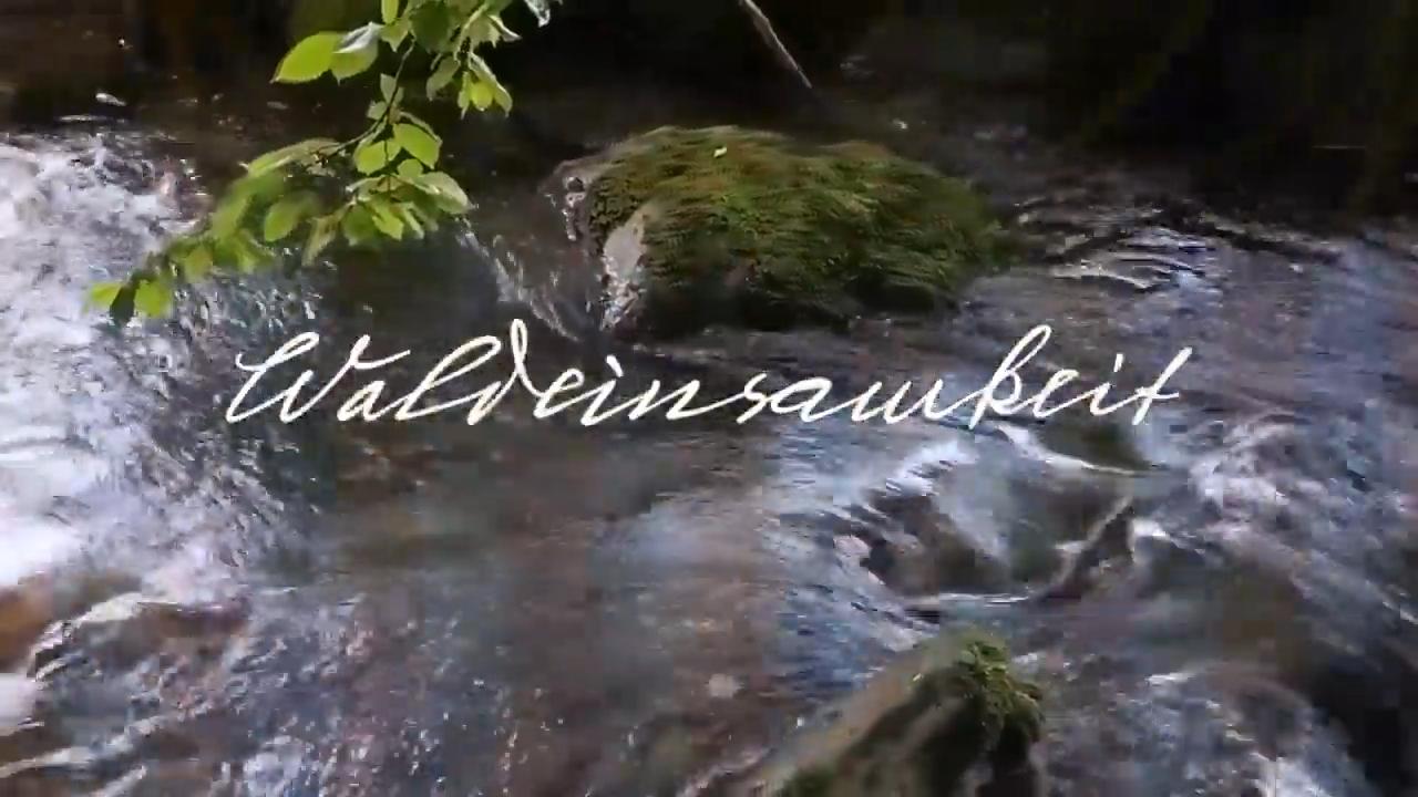 Waldeinsamkeit. Fernab. Nur die Klänge der Natur. – Dadanaut
